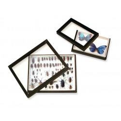 Boîte d'entomologie vitrée